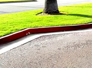 ...after red curb.